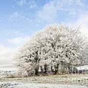 Frosted Copse Poster