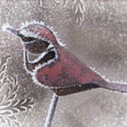 Frosty Cardinal Poster