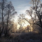 Frosty Morn 3 Poster