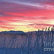 Frosty Winter Sunrise Poster