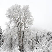 Frozen Giant Poster