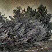 Frozen November Day Poster