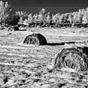frozen snow covered hay bales in a field Forget Saskatchewan Canada Poster