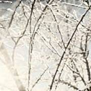 Frozen Tree Branches In Winter Poster