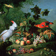 Fruit And Birds Poster