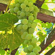 Fruit Of The Vine - Garden Art For The Kitchen Poster