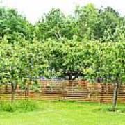 Fruit Trees Poster