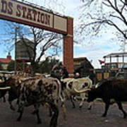 Ft Worth Trail Ride At Ft Worth Stockyard Poster