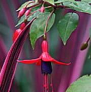 Fuchsia Delight Poster