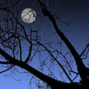 Full Moon And Black Winter Tree Poster