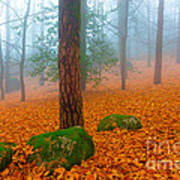 Full Of Autumn Poster