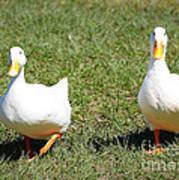 Fun Ducks Poster