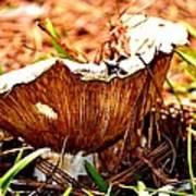 Fun Fungus Poster