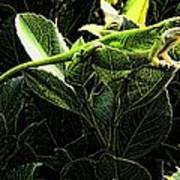 Fractal Nature South Carolina Green Lizard Poster