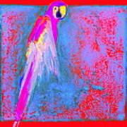 Funky Rainbow Parrot Art Prints Poster