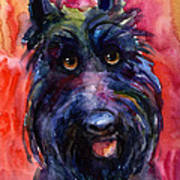 Funny Curious Scottish Terrier Dog Portrait Poster by Svetlana Novikova