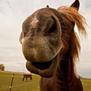 Funny Horse Poster by Paulina Szajek