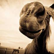 Funny Horse Sepia Poster by Paulina Szajek