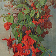Fushia And Snapdragon In A Vase Poster