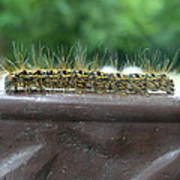 Fuzzy Caterpillar  Poster