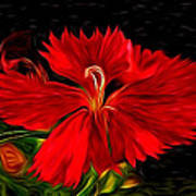 Galactic Dianthus Poster