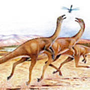 Gallimimus Dinosaurs Poster