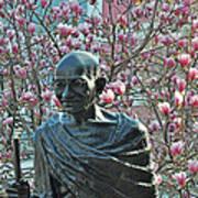 Union Square Gandhi With Magnolias Poster