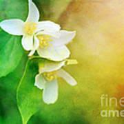 Garden Bliss Poster