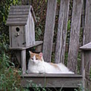 Garden Cat Poster