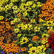 Garden Colors Poster