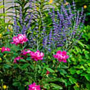 Garden Delights Poster