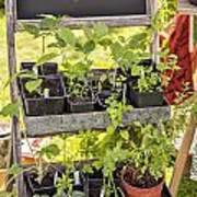 Garden Herb Nursery Poster