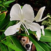 Garden Hound Poster