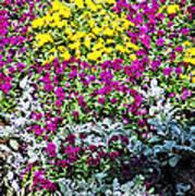 Garden Variety Poster
