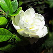 Gardenia 2013 Poster