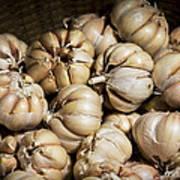 Garlic In A Basket. Poster