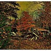 Gathering Wood For Winter  Poster by Dianne  Lacourciere