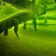 Gator Reflection Poster