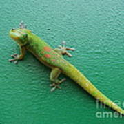 Gecko Crossing Poster