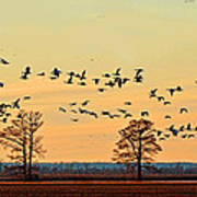 Geese In Flight I Poster