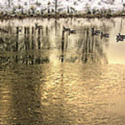 Geese On Golden Pond Poster