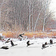 Geese Over Maumee River Poster