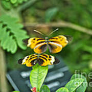 Gentle Butterfly Courtship 02 Poster