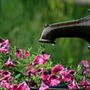 Gentle Rain - Old Water Pump - Pink Petunias - Casper Wyoming Poster