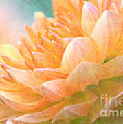 Gently Textured Dahlia  Poster