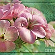 Geranium Blossoms Photoart Poster