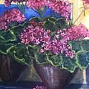 Geraniums Blooming Poster