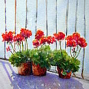Geraniums On My Balcony Poster