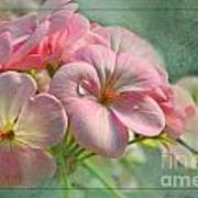Geraniums With Texture Poster