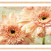 Gerber Daisy 2 Poster